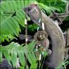 Сотуар Земля - где растут баобабы. : Бирюза, Коралл, Турквенит, Латунь, Кость